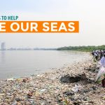9 Simple Ways to Help Save Our Seas