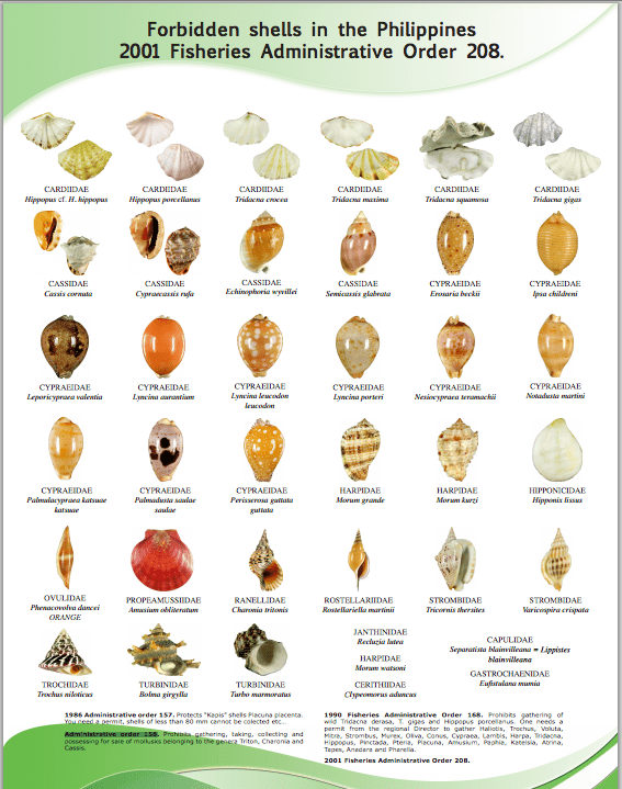 Shells that are protected by Philippine laws. Click photo to enlarge.