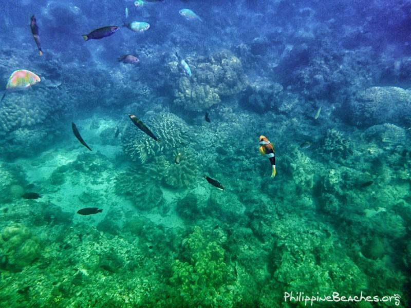 Nemo Species