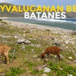 QUICK GUIDE: Kayvaluganan Beach in Uyugan, Batanes