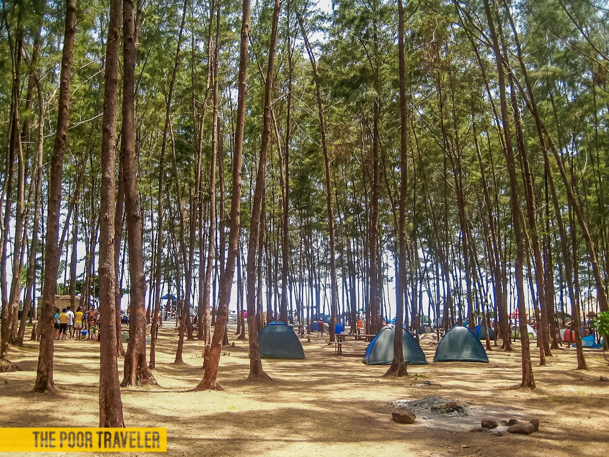 Agoho trees provide shade to campers in Anawangin