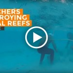 BBC VIDEO: Chinese Poachers Destroying Coral Reefs in Spratlys
