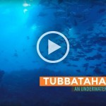 Video: Tubbataha Reef, An Underwater Dreamworld
