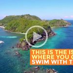 Apo Island, Negros Oriental: Swimming with Turtles (Video)