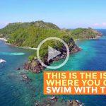 Apo Island, Negros Oriental: Swimming with Turtles (Video)