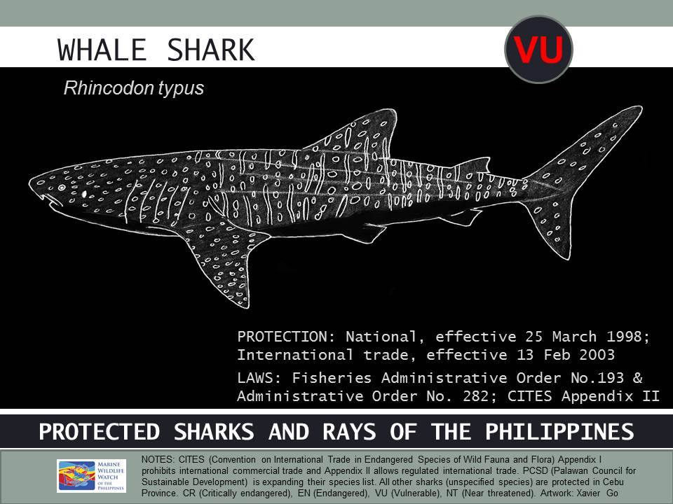 Infographic by Marine Wildlife Watch of the Philippines