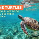 What to Do When You See Marine Turtles on the Beach