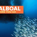 MOALBOAL, CEBU: IMPORTANT TRAVEL TIPS