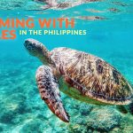 Where to Swim with Turtles in the Philippines