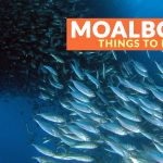 8 Tourist Spots for Your MOALBOAL ITINERARY